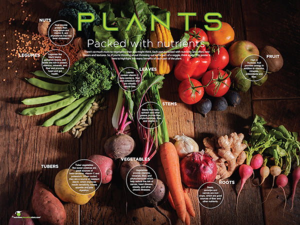 "Plants: Many Beneficial Parts Vinyl Health Fair Banner 48"" x 36"" - Nutrition Education Store"