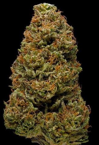 Harlequin-Marijuana-Strain-High-CBD-Sativa-Review