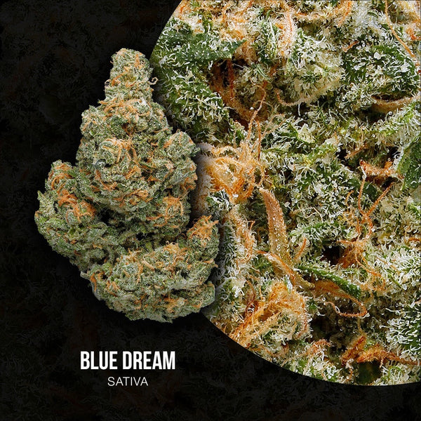Adults Only 21 Up: Best Blue Dream Strain - Organic Cannabis