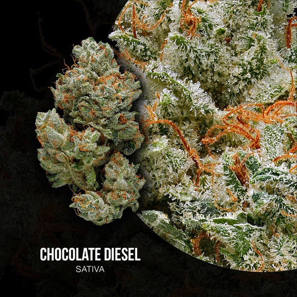 Best Chocolate Diesel Strain - Organic Cannabis | Green Door West