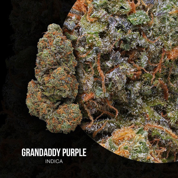 Green Door West - GrandDaddy Purple - GreenDoorWest.com - 2