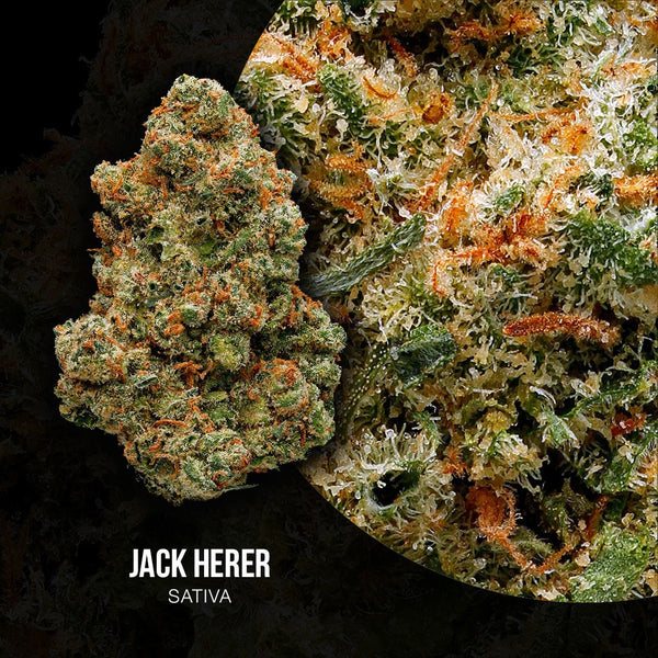 Green Door West - Jack Herer - GreenDoorWest.com - 2