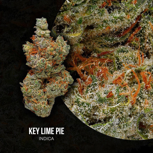 Adults Only 21 Up: Best Key Lime Pie Strain - Organic Cannabis