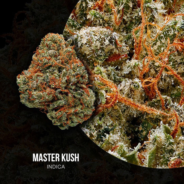 Adults Only 21 Up: Best Master Kush Strain - Organic Cannabis