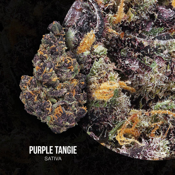 Adults Only 21 Up: Best Purple Tangie Strain - Organic Cannabis