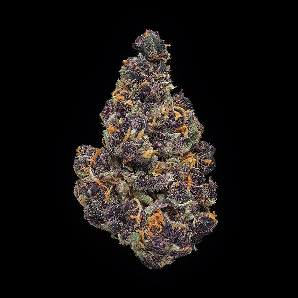 Purple Tangie