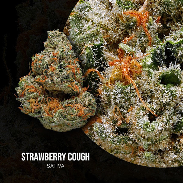 Adults Only 21 Up: Best Strawberry Cough Strain - Organic Cannabis