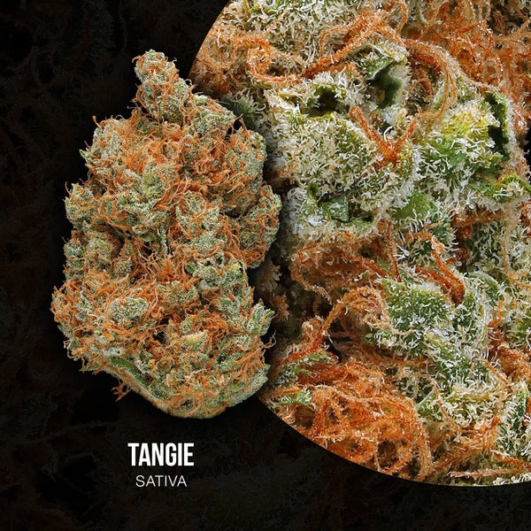 Adults Only 21 Up: Best Tangie Strain - Organic Cannabis