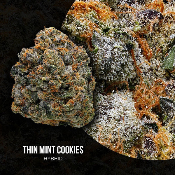 Green Door West - Thin Mint Girl Scout Cookies - GreenDoorWest.com - 2