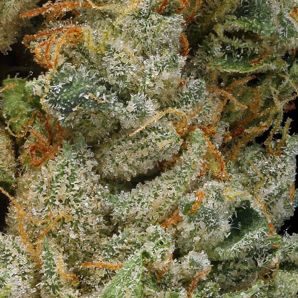 Adults Only 21 Up: Best GDW White Widow Strain - Organic Cannabis