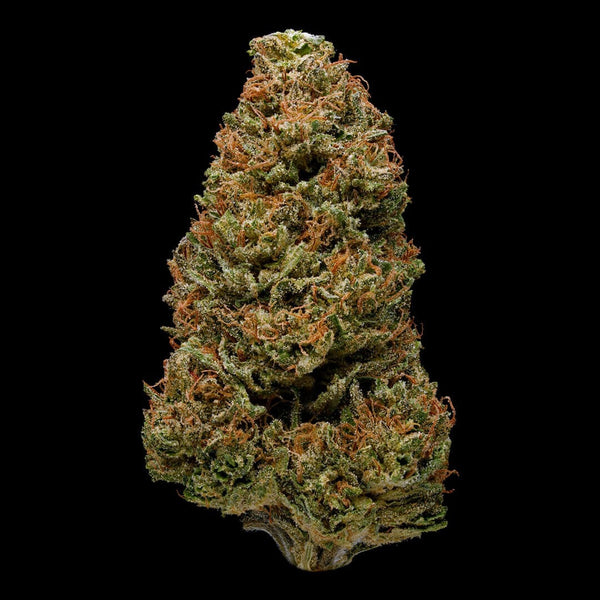 Adults Only 21 Up: Best Harlequin High CBD Strain - Organic Cannabis