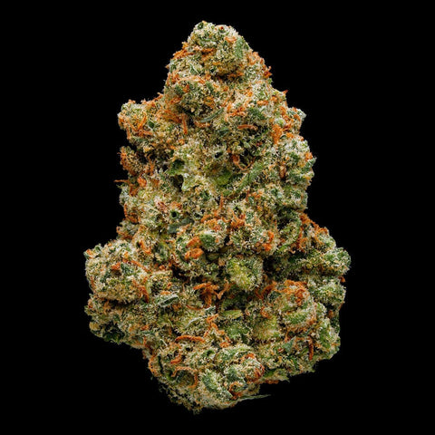 Green Door West - Jack Herer - GreenDoorWest.com - 1