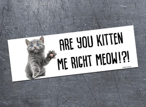 Are You Kitten Me Bumper Magnet