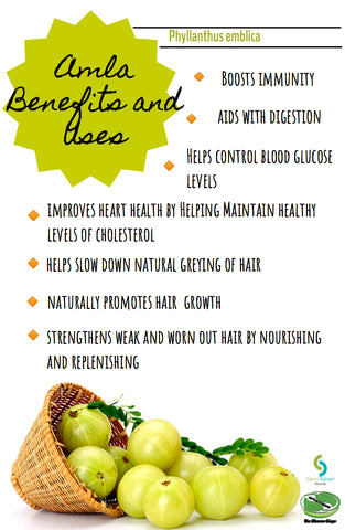 Amla Powder And How It Can Aid You In Many Different Ways