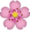 Download Cherry Blossom Emoji