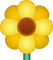 Download Yellow Blossom Emoji In PNG