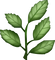 Download Herb Emoji In PNG