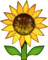 Download Sunflower Emoji In PNG