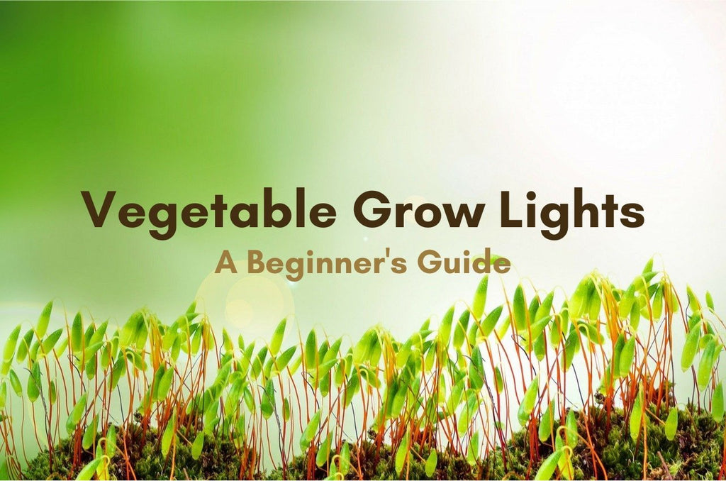 A Beginner's Guide to Vegetable Grow Lights