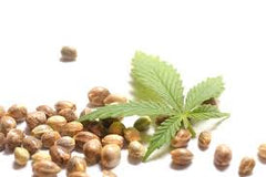 Hemp Seeds & Hemp Leaf