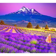 High Alpine Lavender Essential Oil - The Hippie House
