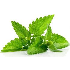 Spearmint Essential Oil - The Hippie House