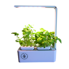 Indoor Smart Garden For Kitchens - The Hippie House