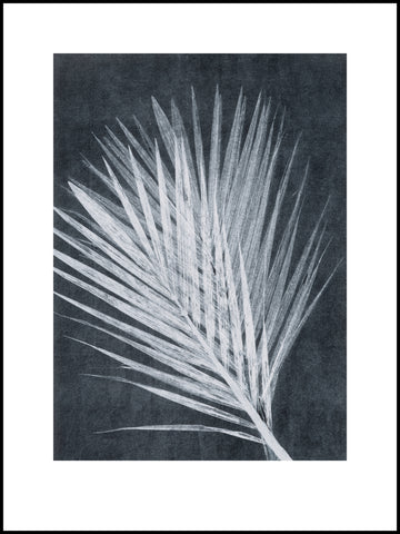Black and White Palm Limited Edition Print 30cm x 40cm