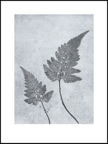 Dusty Blue Fern Limited Edition Print - 30cm x 40cm