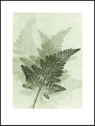 Green Fern Limited Edition Print - 30cm x 40 cm
