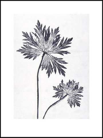 Blue Grey Geranium Limited Edition Print