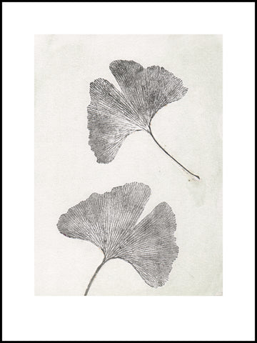 Oyster Gingko Limited Edition Print