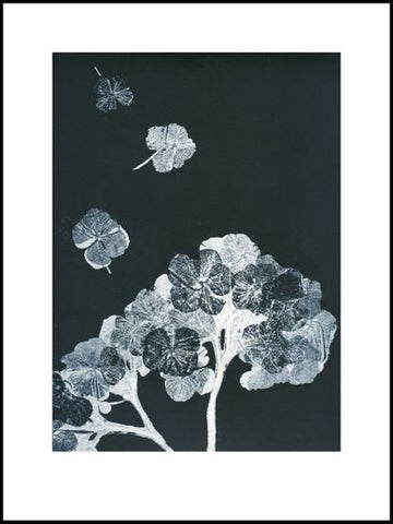 Black and Grey Hydrangea Limited Edition Print -30cm x 40cm