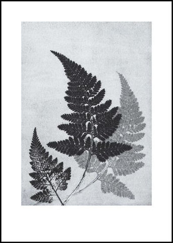 Blue/Grey Fern Limited Edition Print -50cm x 70cm