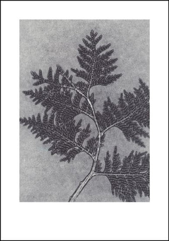 Smoke Grey Thuja Limited Edition Print - 70cm x 100cm
