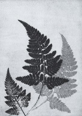 Grey Fern Print A5 Postcard