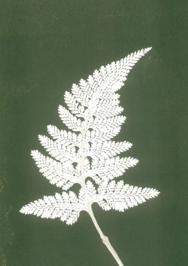 Green and White Fern Print A5 Postcard