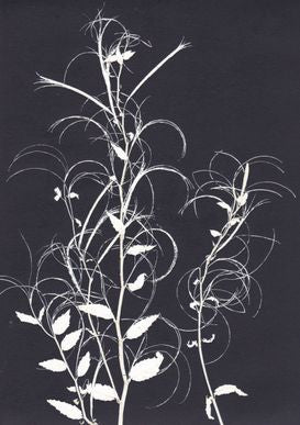 Black and White Willowherb Print A5 Postcard