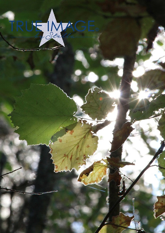 Leaves in the sun - Stockholm, Sweden