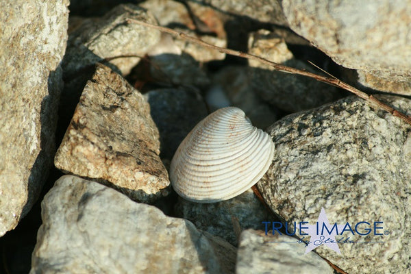 Lone seashell - Kavala, Greece