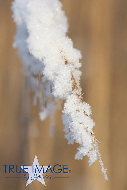Snowy straw of grass - Stockholm, Sweden