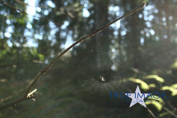 Spiderweb in the sun - Södermanland, Sweden