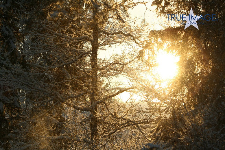 Sun through snowy trees - Stockholm, Sweden