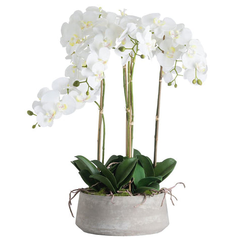 Large bowl of Orchids in stone pot   coming soon