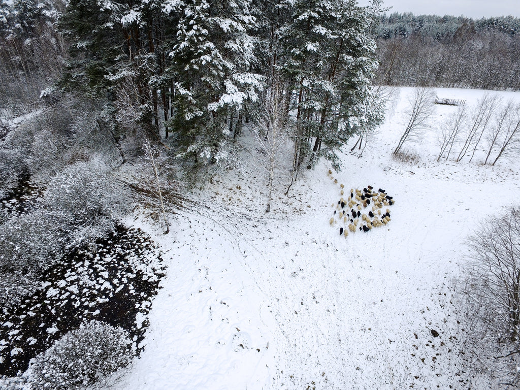 Drone picture of a forest land in winter
