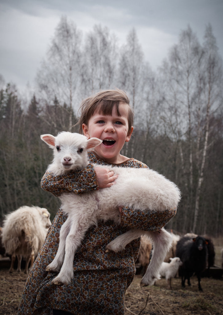 Little girl holding a little lamb sheep in a farmstead close to forest