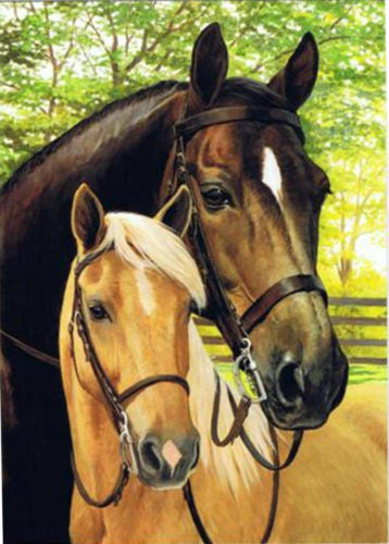 Western Home Decor New Blank Note Card Matching Envelope Mare Foal
