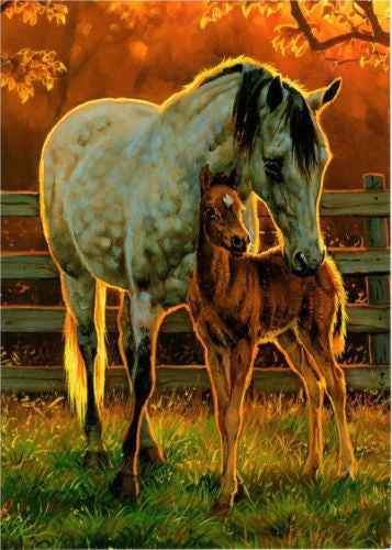 Western Home Decor Blank Note Card Matching Envelope Quiet Time Horse