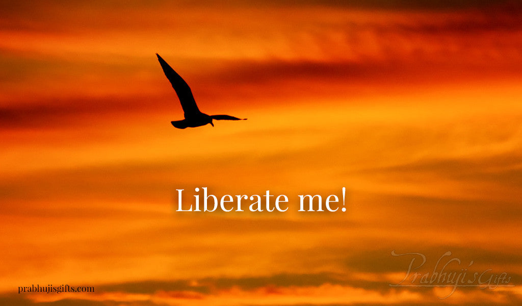 liberate Me seagull sunset