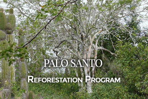 Palo Santo Reforestation Program